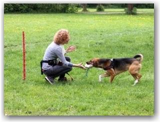Heilbehandung Hund
